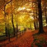 Was ist die Trendfarbe des Herbstes 2009?