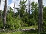 Welches Tier wurde im Bayerwald erfolgreich wieder angesiedelt?