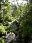 Welcher abermals wichtige Handelsweg im Bayerischen Wald feiert derzeit 1000 jähriges Jubiläum?