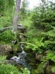 Welches Gewerbe hat im Bayerischen Wald Tradition?