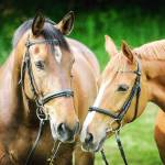 Wie wichtig sind dir Pferde?
