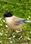 Wer hält den Vogel Berti gefangen in der Folge: Frei wie ein Vogel?