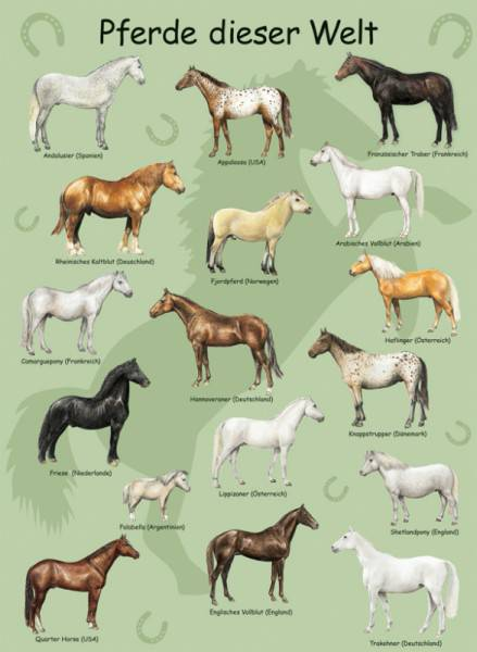 Rennpferde Namen