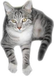 Welcher Warrior Cats Charakter Bist Du