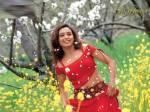 Wann hat Rani Mukherjee Geburtstag?