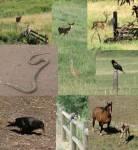 Welches der folgenden Tiere würdest du dir aussuchen?