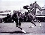 War Phar lap das beste australische Rennpferd?