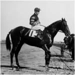 War Man O'war eines der erfolgreichsten Rennpferde der Amerikanischen Vollblutzucht?