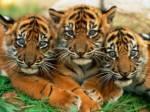 Welches dieser Tiere magst du mehr?