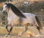 Bei Howrse kann man maximal 300 Pferde haben.