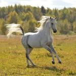 Willst du ein Pferd wo so schnell ist wie der Wind?