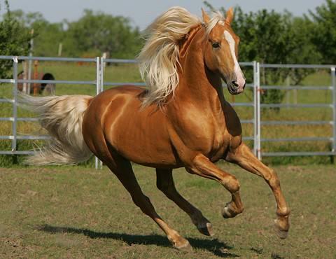 Welche Pferderasse passt zu mir?