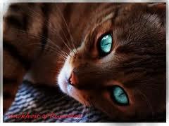 dein leben in der welt von warrior cats lange auswertung. Black Bedroom Furniture Sets. Home Design Ideas