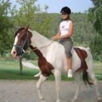 Wie groß bist du? Willst du lieber ein großes Pferd oder ein Pony?
