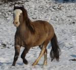 Sah das Urpferd Eohippus schon genauso aus wie ein heutiges Pferd?
