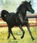 Wie nennt man ein schwarzes Pferd?