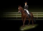 Hast du ein eigenes Pferd?