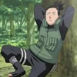 Zur ersten Frage: Wer ist Shikamarus Sensei?