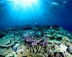Wie lang ist das Barriere-Riff?