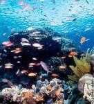 Wieviele Fischarten leben im Bereich des Barrieren-Riffs?