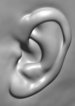 Wie lang sind deine Ohren?