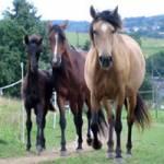 Welches Pferd wärst du?