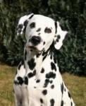Welcher Hund ist das hier im Bild?