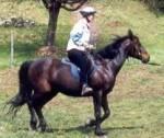 Belastet das Leichttraben den Pferderücken?
