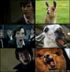 Holmes züchtet Tiere, welche sind das?
