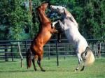Bis zu welchem Alter würdest du als Pferd-wenn du gesund und gut in Form bist-auf Turniere gehen WOLLEN..?