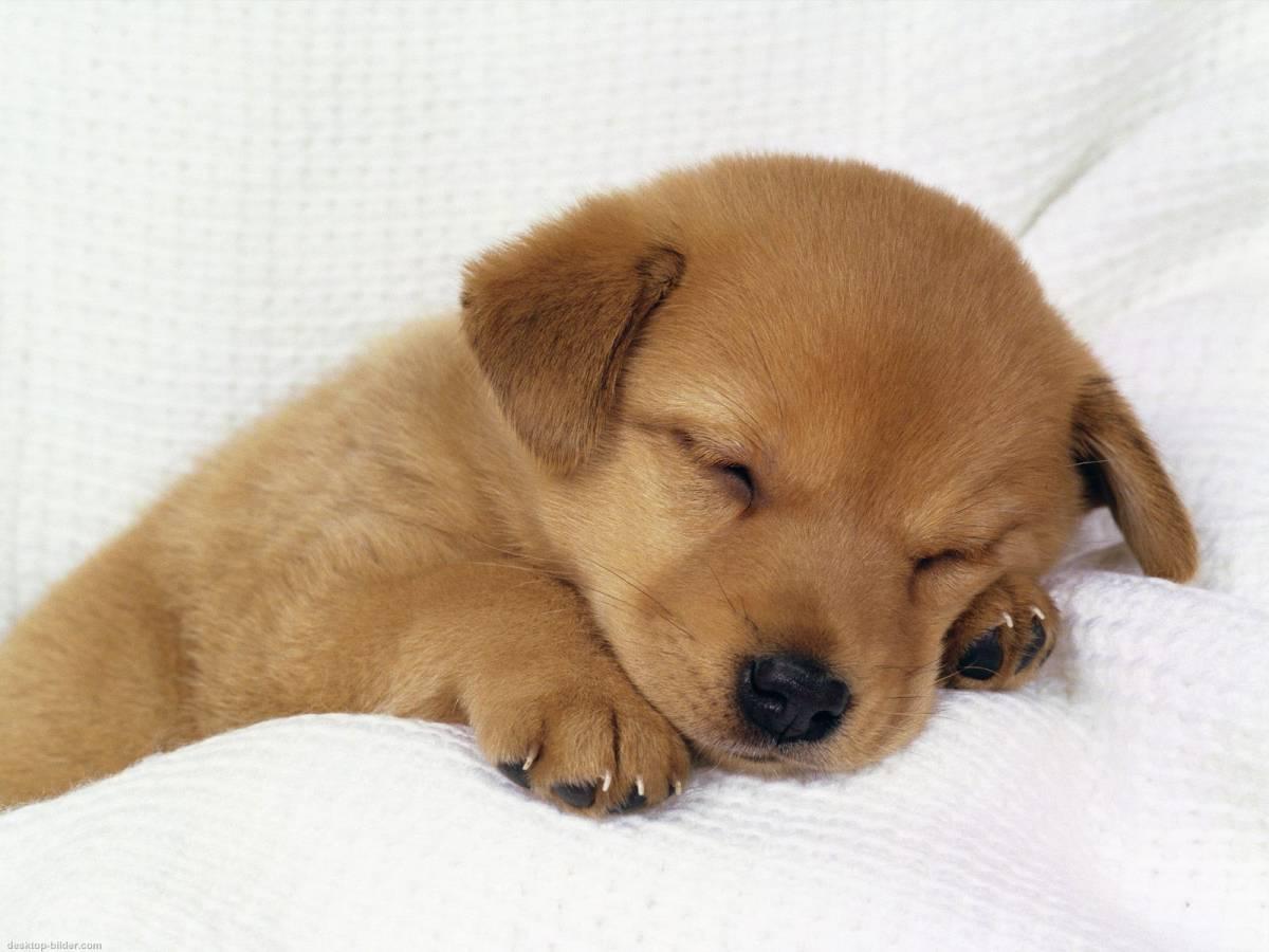 Stell dir deinen traumhund einmal vor wie ungefähr sieht er