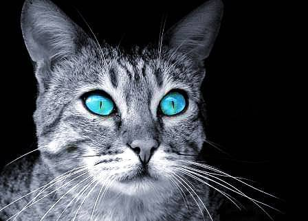 Warrior Cats Tests Quizzes