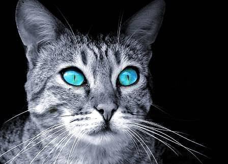Warrior Cat Rpg Forum