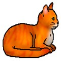 Warrior Cats/ Wer bist du?