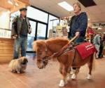 Es gibt Blinden-Pferde.