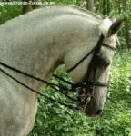 Ein Pferd muss immer mit Kandare geritten werden.