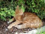 Welche PhönixClan-Katze ist dir am ähnlichsten?