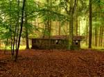 Der geheimnisvolle Wald
