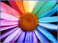 Welche Farben findest du am Schönsten?