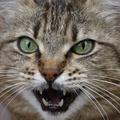 Wie ist dein Warrior Cats Charakter und wie heißt du?