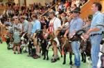 Wo in Österreich fand die letzten Bundesschau der Schafe und Ziegen statt?