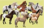 Welches ist das häufigste Pferd auf Howrse?