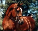 Welche der folgenden Pferdefellfarben magst du am meisten?