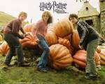 Wen entwaffnete Harry, mit einem Expelliarmus, in der heulenden Hütte?