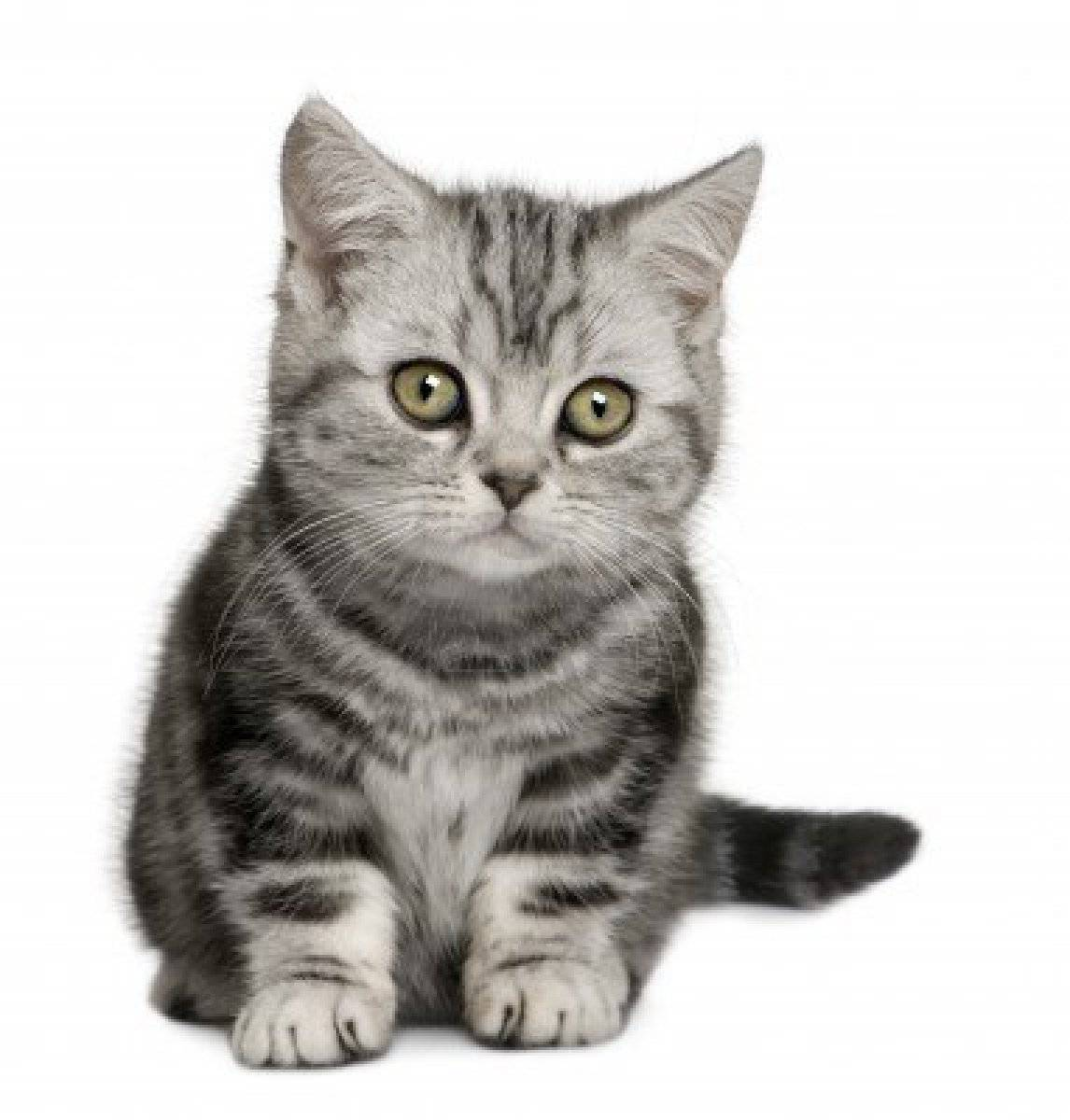 What To Name A Grey Tabby Cat