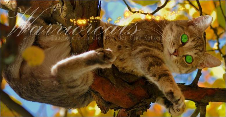Warrior Cats Quiz F 252 R Heilerkatzen
