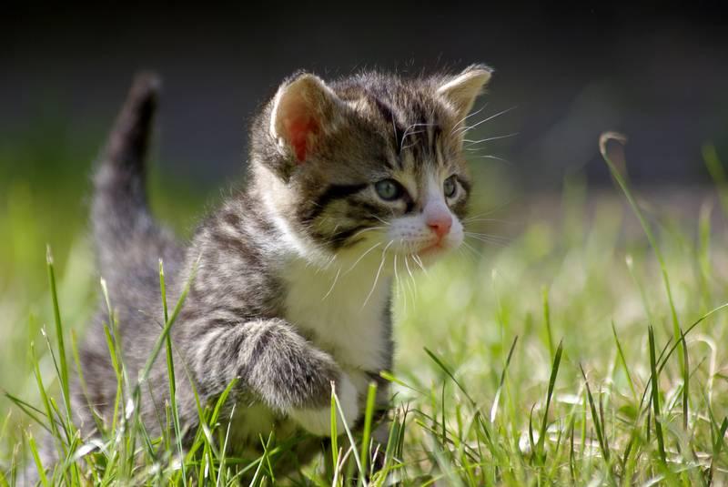 Warrior Cats Figuren