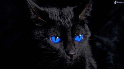 Poster Warrior Cats Schwarze Katze