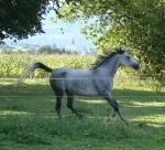 Was für ein Pferd passt zu dir?