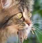 Jagdprüfung: Du siehst eine Maus. Was tust du?